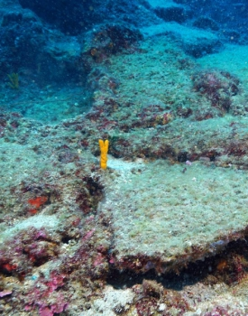 Worlds Oldest Shipwreck Found in Mediterranean